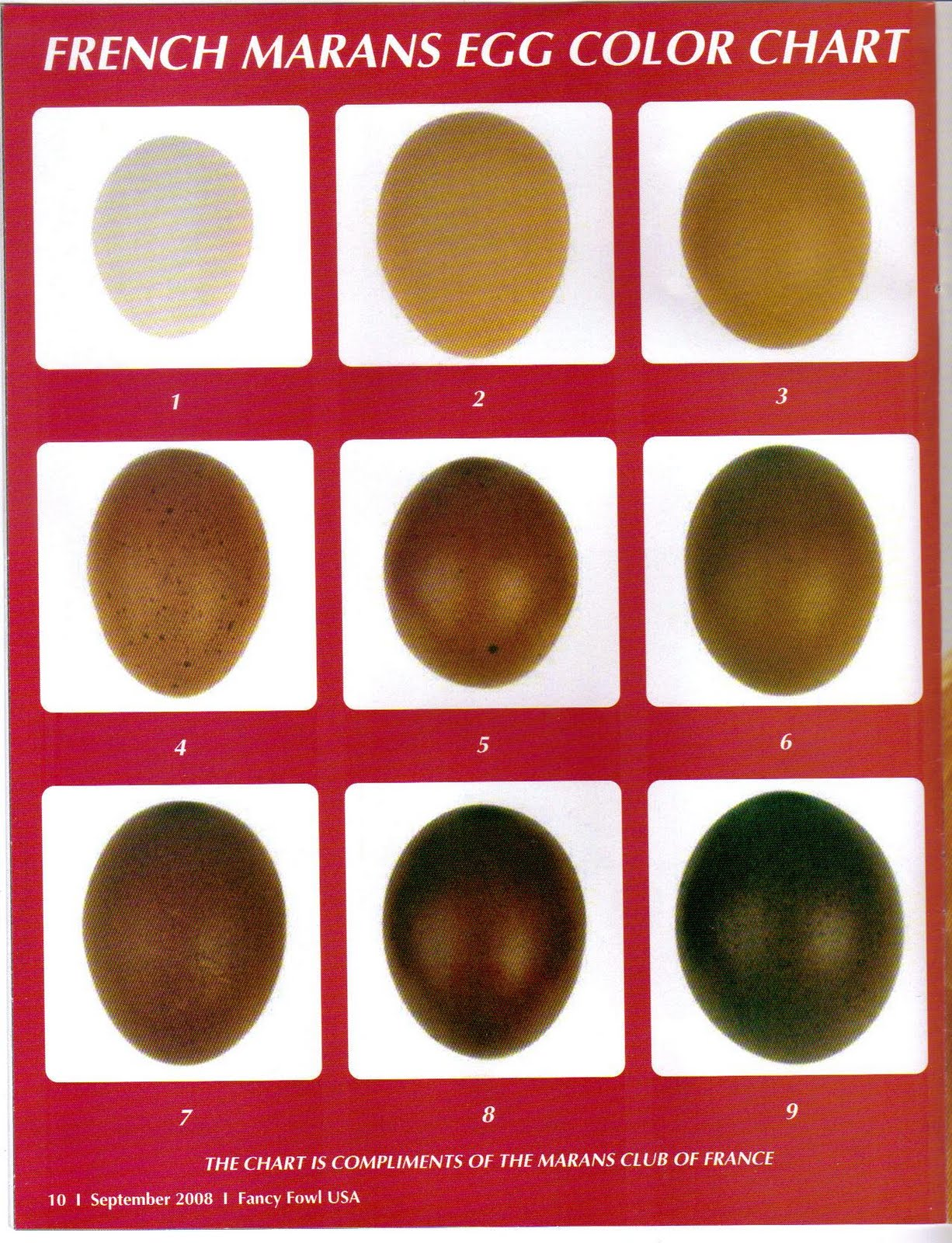 Marans Egg Color Chart Published January 21 2017 At 1226 1600 In
