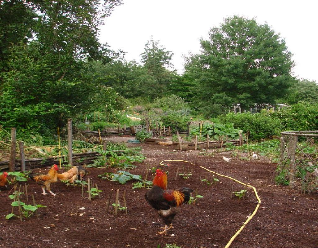 Backyard Garden with Chickens